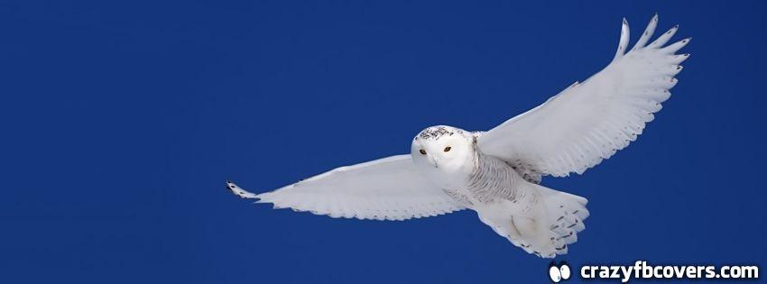 Snowy Owl In Flight Facebook Cover - Facebook Timeline ...