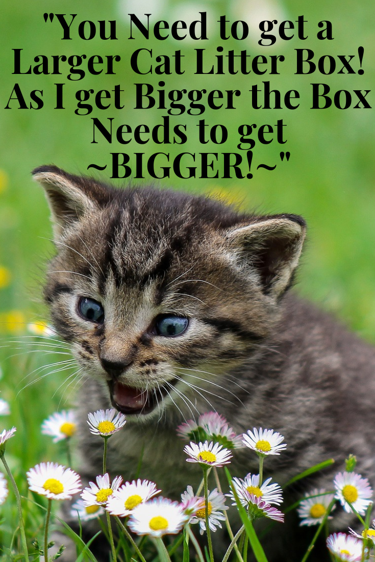 Four Inch Litter Boxes ARE THE CAUSE of so Many Problems