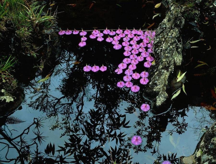 Nature Land Art Installations by Nils Udo – Fubiz Media