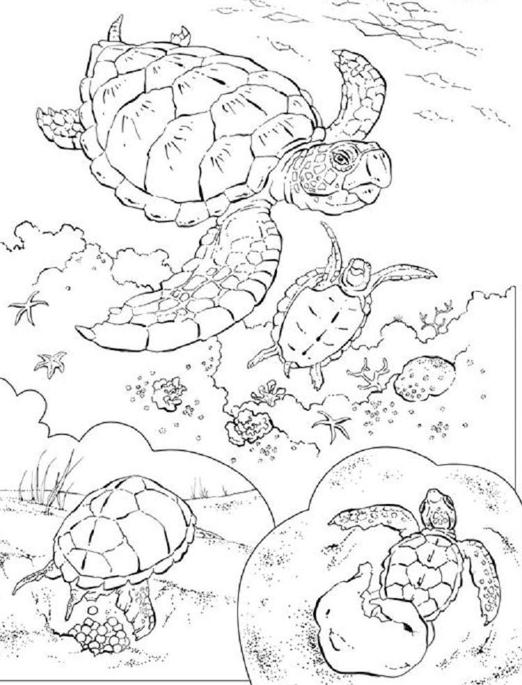 Animal Coloring Pages National Geographic 거북이 그림 바다거북
