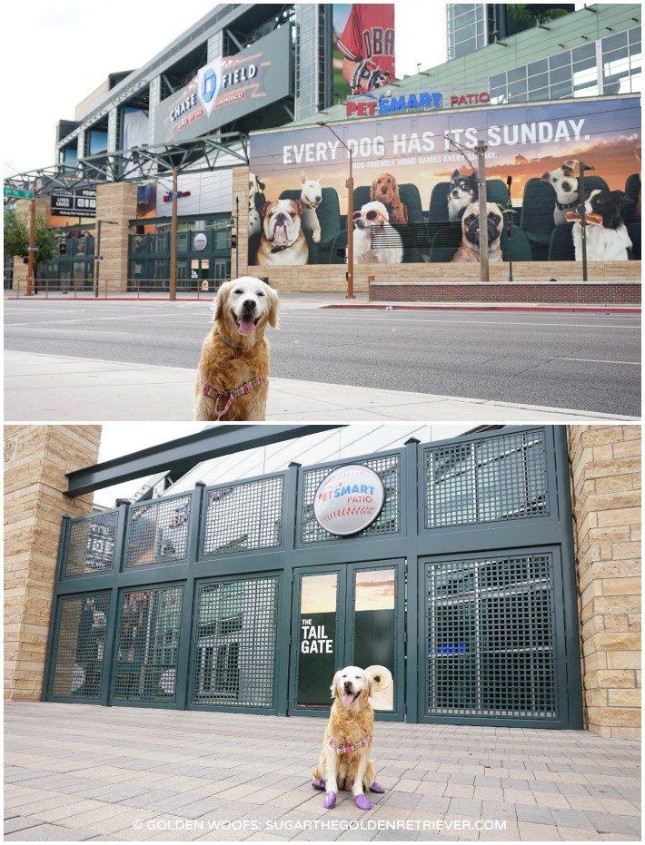 Every Dog Has Its Sunday At Petsmart Patio Shelter Dogs Dogs Petsmart