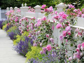 Westie Art Garden Pink Roses White Picket Fence Garden Inspiration Dream Garden Beautiful Gardens