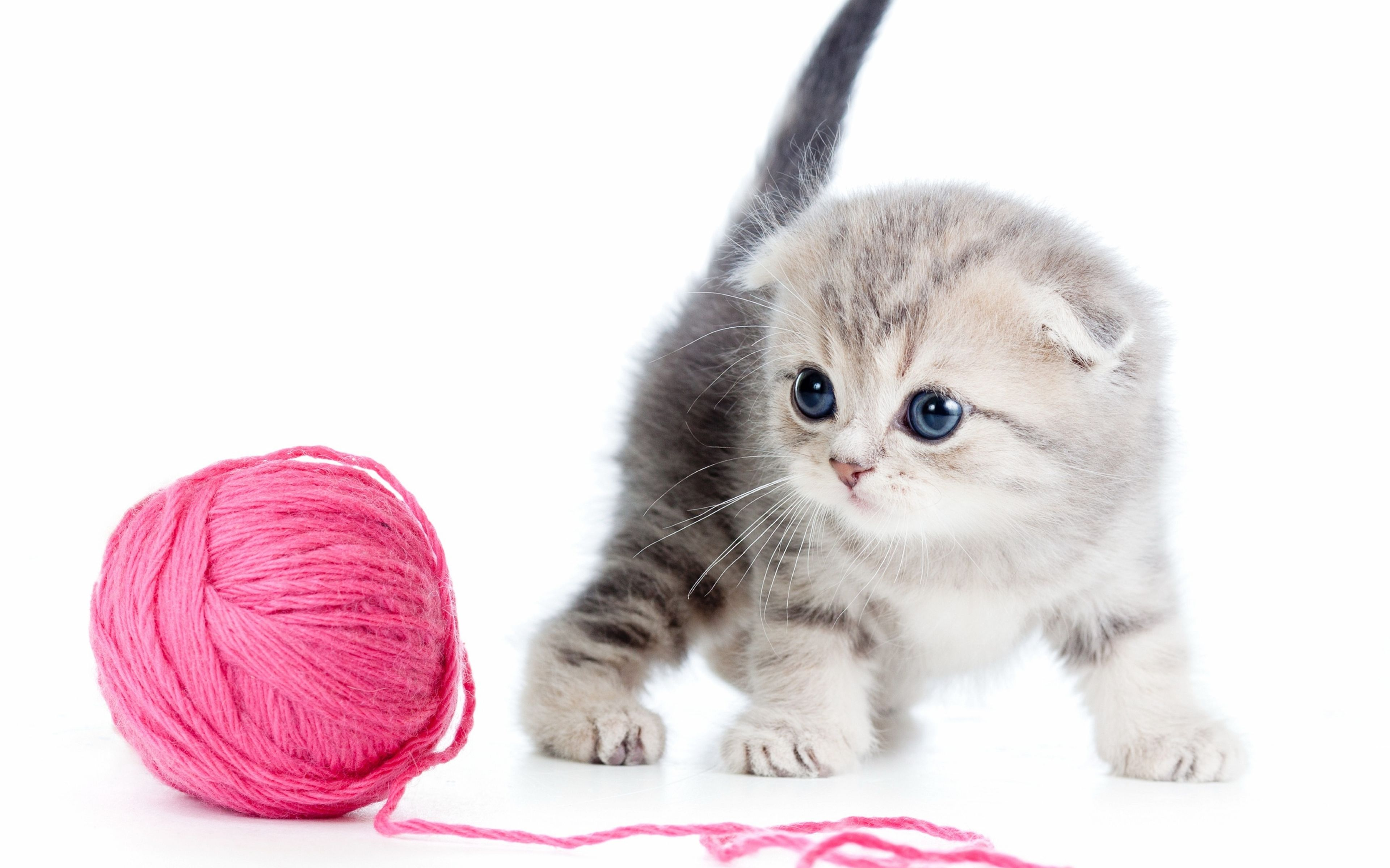 Cute White Kittens Wallpapers Kitten Wallpaper Cute Cats And Kittens Kittens Cutest