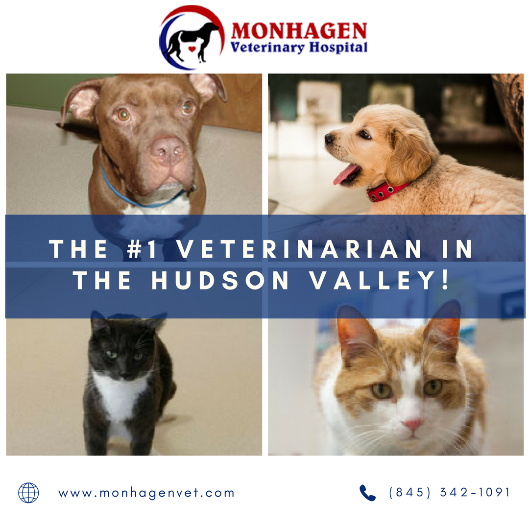 Pet Care Services By Monhagen Veterinary Hospital