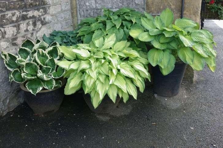 Najladniejsze Byliny Na Balkon I Taras Wybieramy Wieloletnie Rosliny Na Balkon Indoor Vegetable Gardening Plants House Plant Care