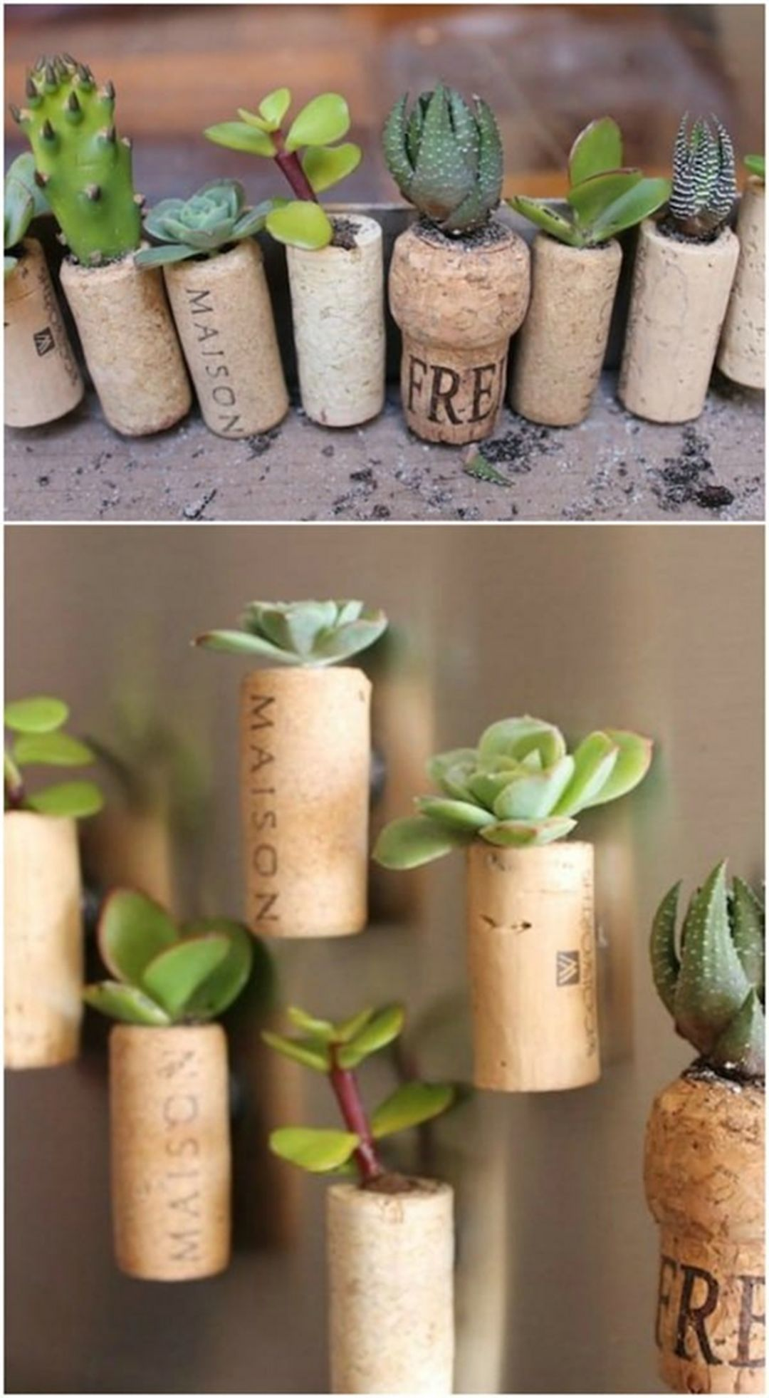 35 cute diy succulent wine cork ideas for easy home