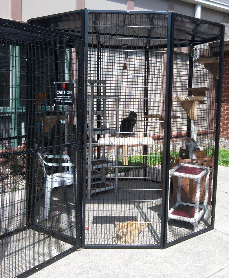 Hsi S Old Fiv Catio Cat Enclosures Chicken Coops