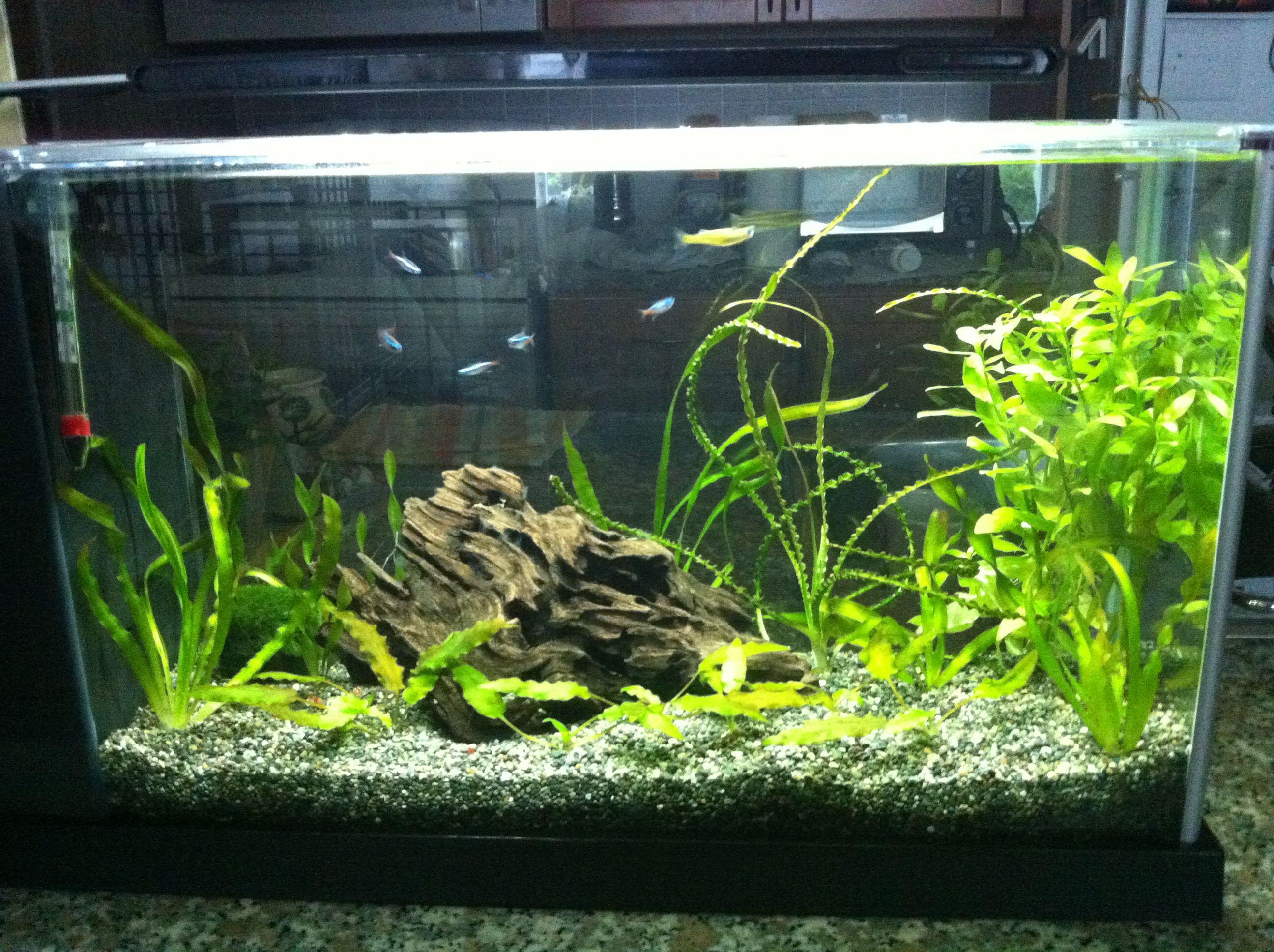 My 5 Gallon Fluval Spec Aquarium Aquarium Fish Tank Fresh Water Fish Tank Betta Fish Tank