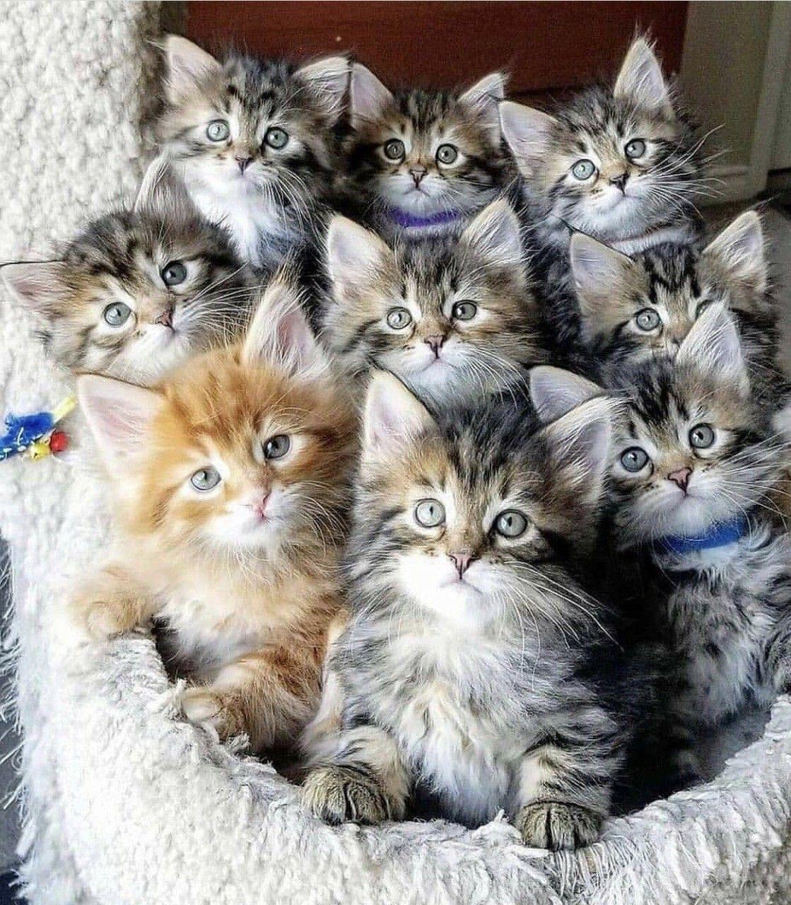 Фото красивых котят с приколами