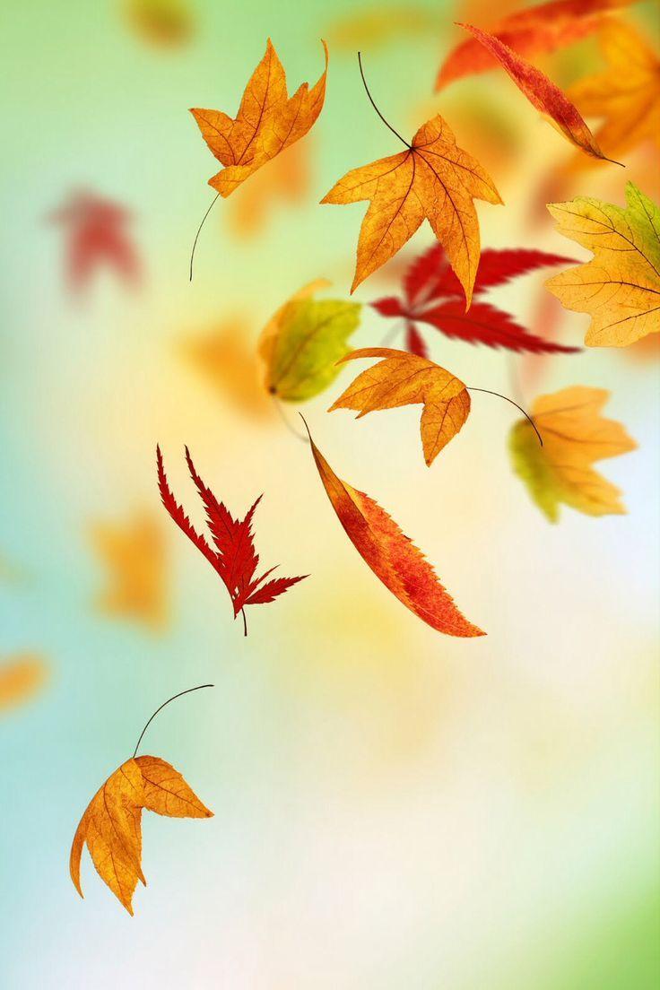 November iphone wallpaper tumblr - Watercolour Autumn Leaves Iphone Wallpaper Buscar Con Google