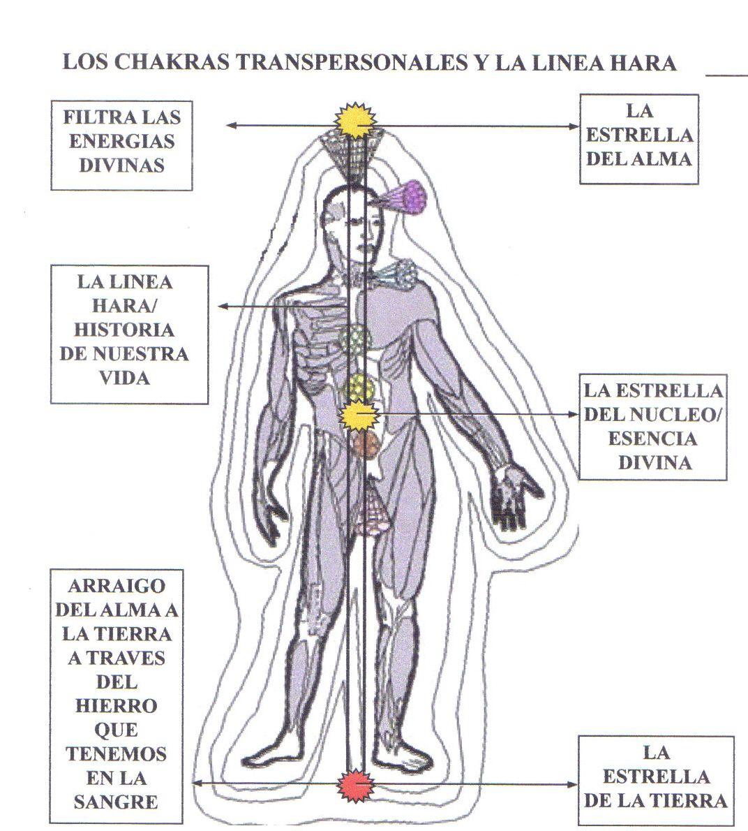 los chakras transpersonales y la l u00ednea hara