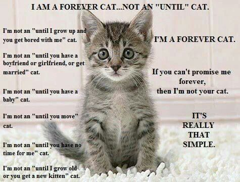 Pin By Amanda On Advocate For Animals Super Cute Kittens Cats Kittens Cutest