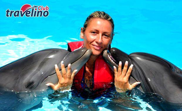 Fare Il Bagno Con I Delfini A Sharm Nuoto Delfini E Sharm El Sheikh