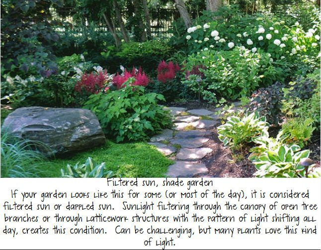 Filtered Sun Shade Garden Shade Garden Plants Shade Landscaping