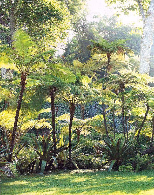 Schon Farne Garten, Tropischer Garten, Dschungel, Baum, Tropische