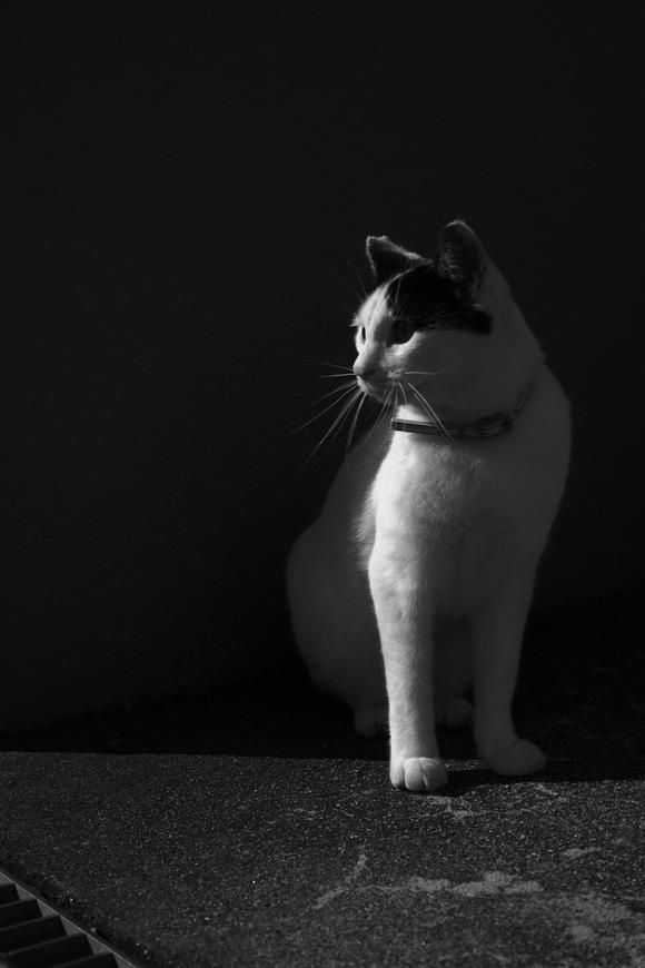 To the cat who refers the light