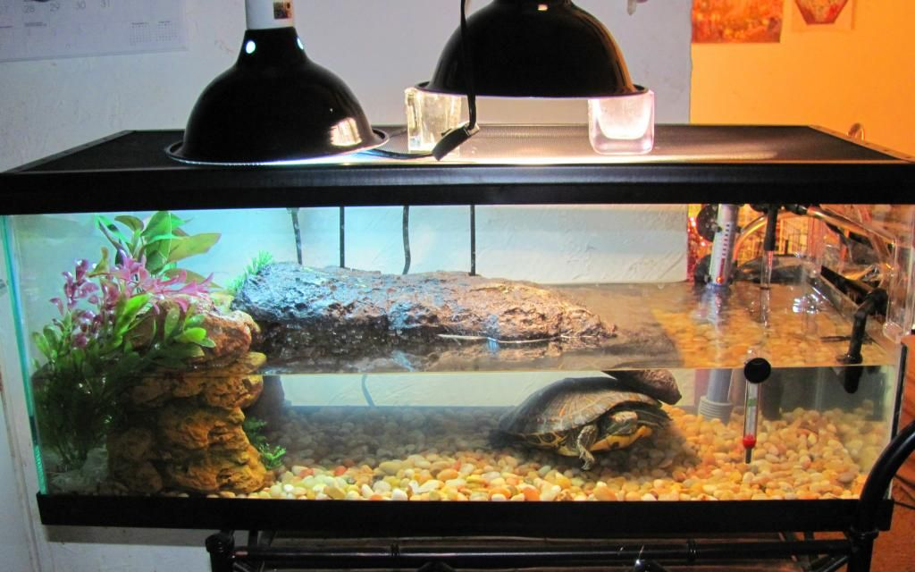 Red eared slider tank google search turtle tanks Turtle decorations for home