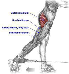 Gluteos | Musculación | Pinterest | Anatomy, Strength and Workout