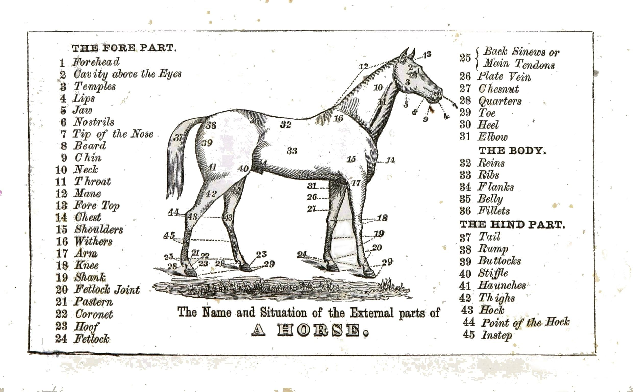 horse body parts chart Establishment Equine Etiquette or