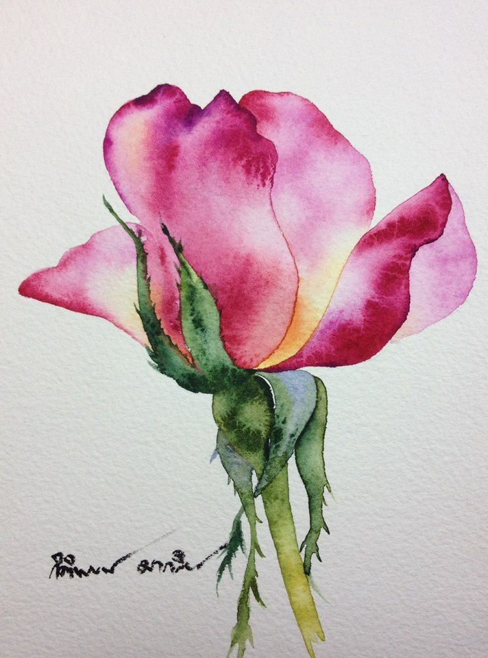 gorgeous watercolor rose lukisan pinterest watercolor flowers
