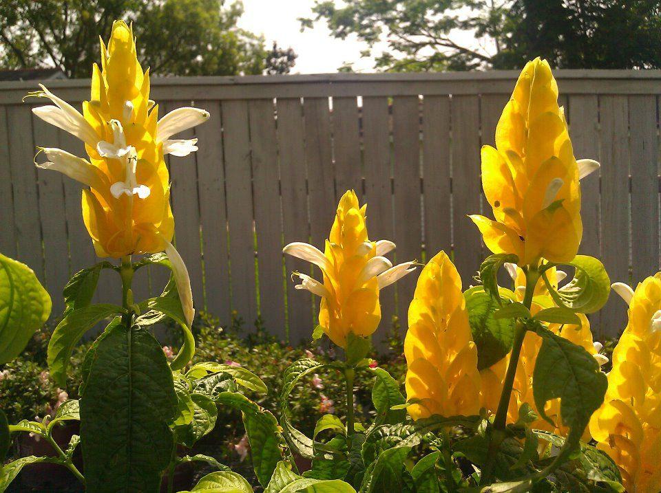 how to make corn husk flowers