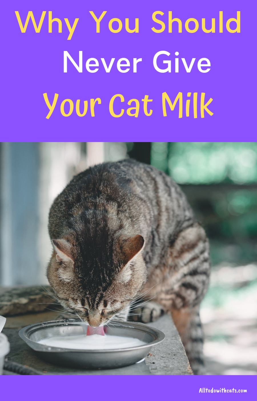 What Foods Are Bad For Cats In 2020 Cat Nutrition Cats Toxic Foods