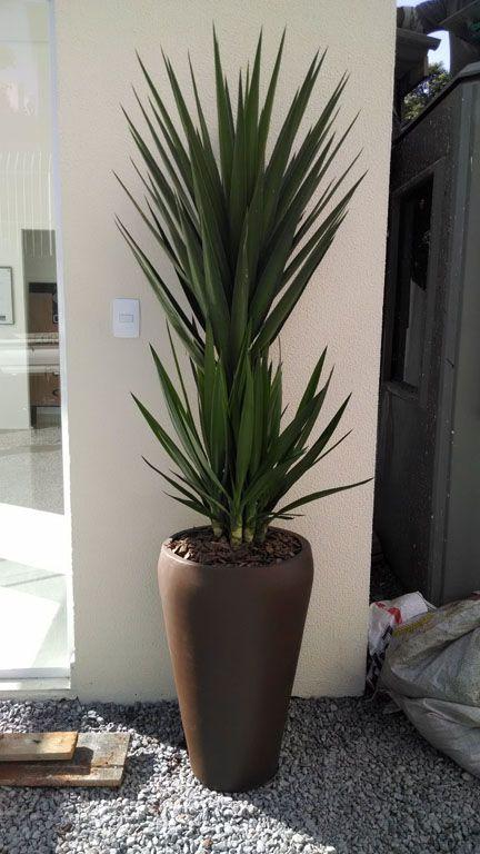 Arranjo yuca vaso de cimento marrom garden plantas for Plantas decorativas hidroponicas