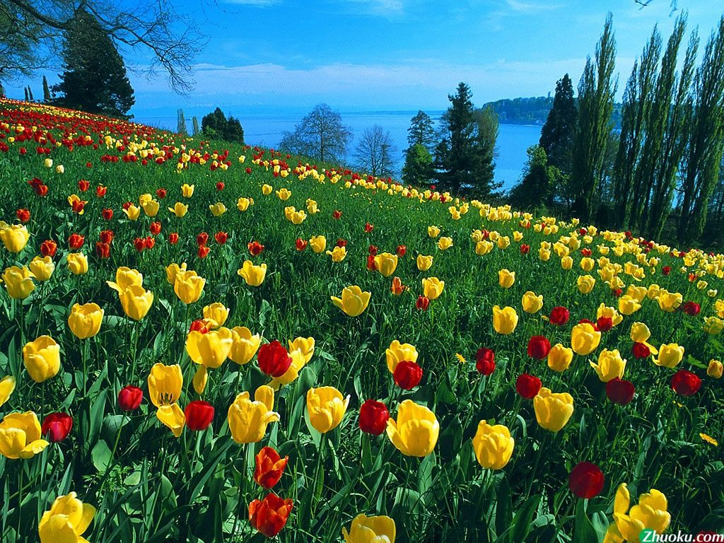 Natual Related Keywords Naturals Beauty Parlour Naturals Beauty Parlour Price Beautiful Flowers Garden Bulb Flowers Beautiful Flowers