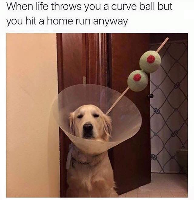 When life throws you in a cone...
