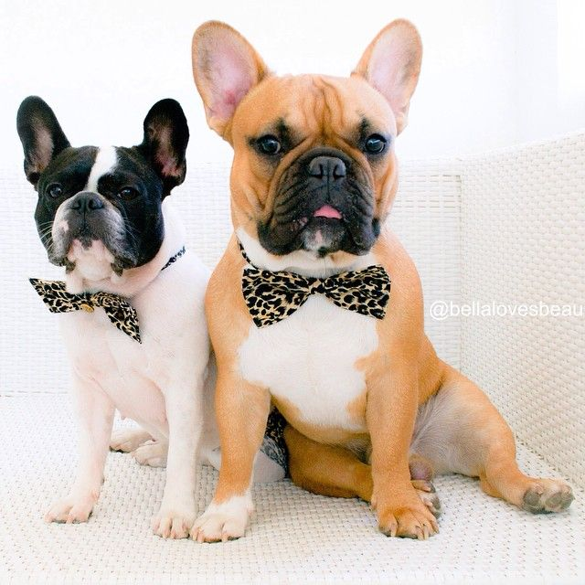 30 Instagram Pets That Colored Our World In 2014 French Bulldog