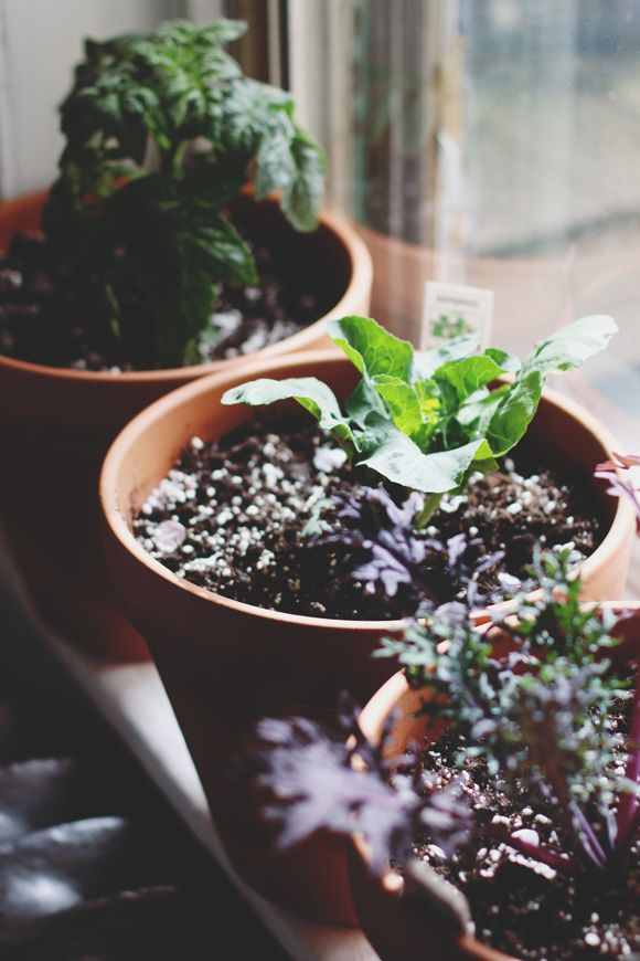 Grow Where You're Planted: Tips For Small Space Gardening | Free People Blog #freepeople