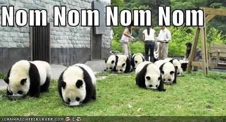 Nom nom eatum up eatum up