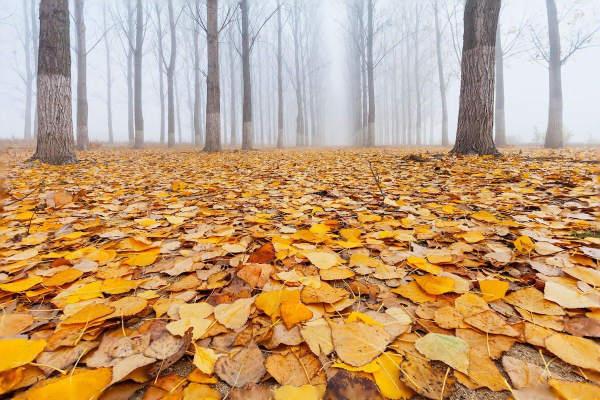 Yellow Carpet by Evgeni Dinev on 500px