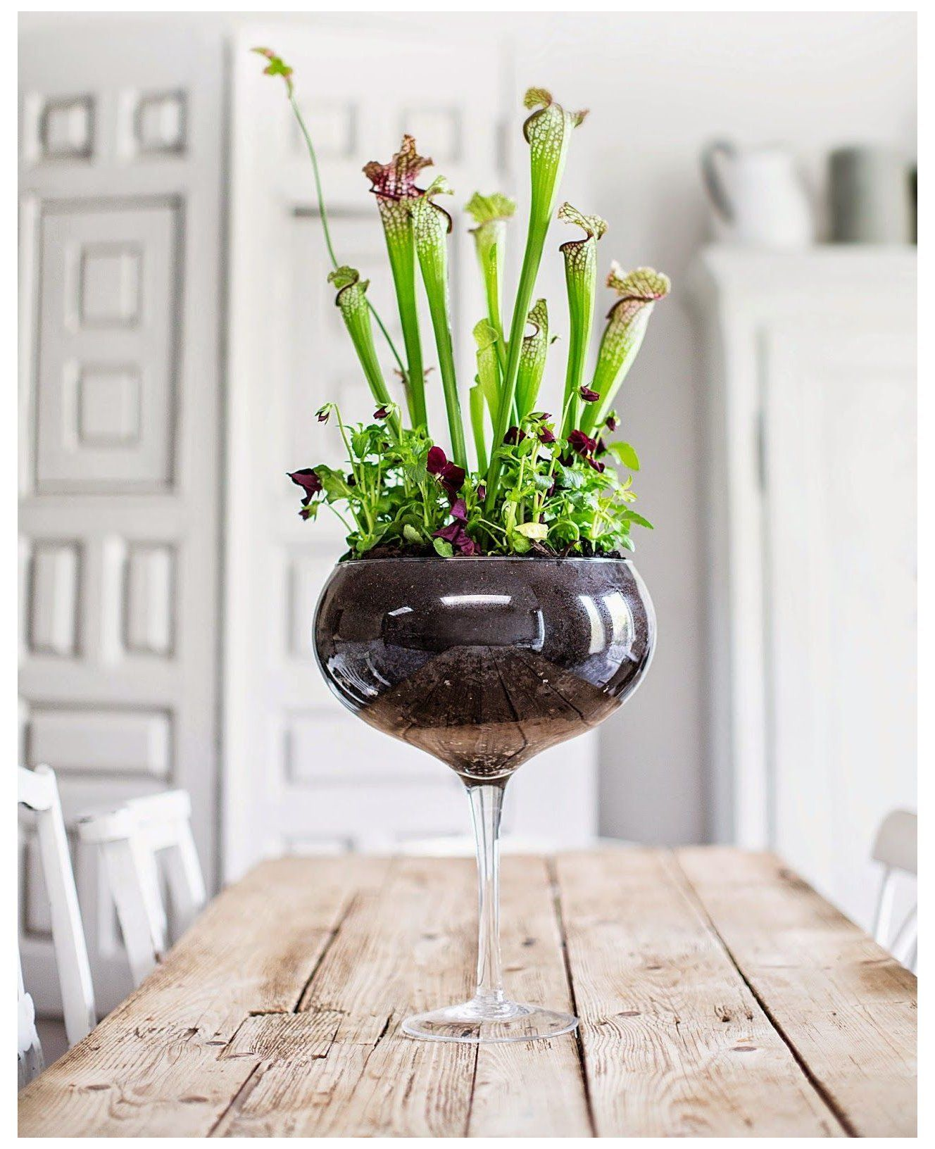 The house gardener pitcher plant potting soil This is