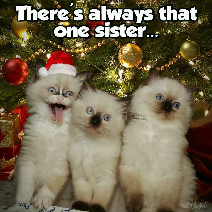 There's always that one sister Funny cat photos, Funny