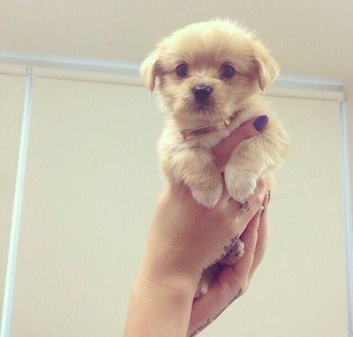 So Cute Tierbabys Tiere Und Hunde Babys