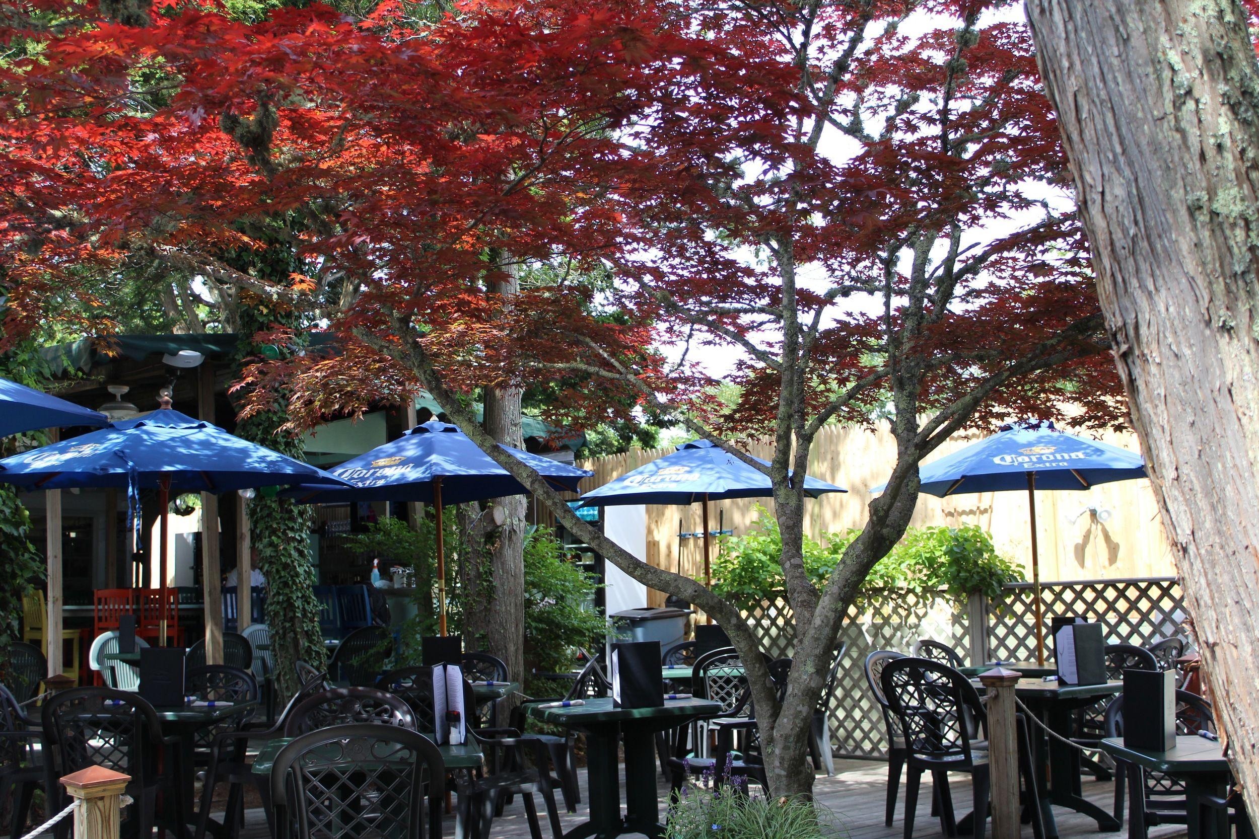 Img 1543 Jpg Patio Umbrella Outdoor Structures Outdoor