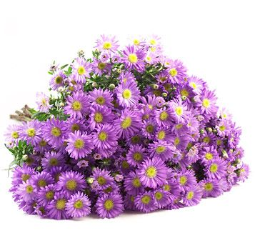 Online Wholesale Aster Flowers Aster Flower Purple Garden Flowers