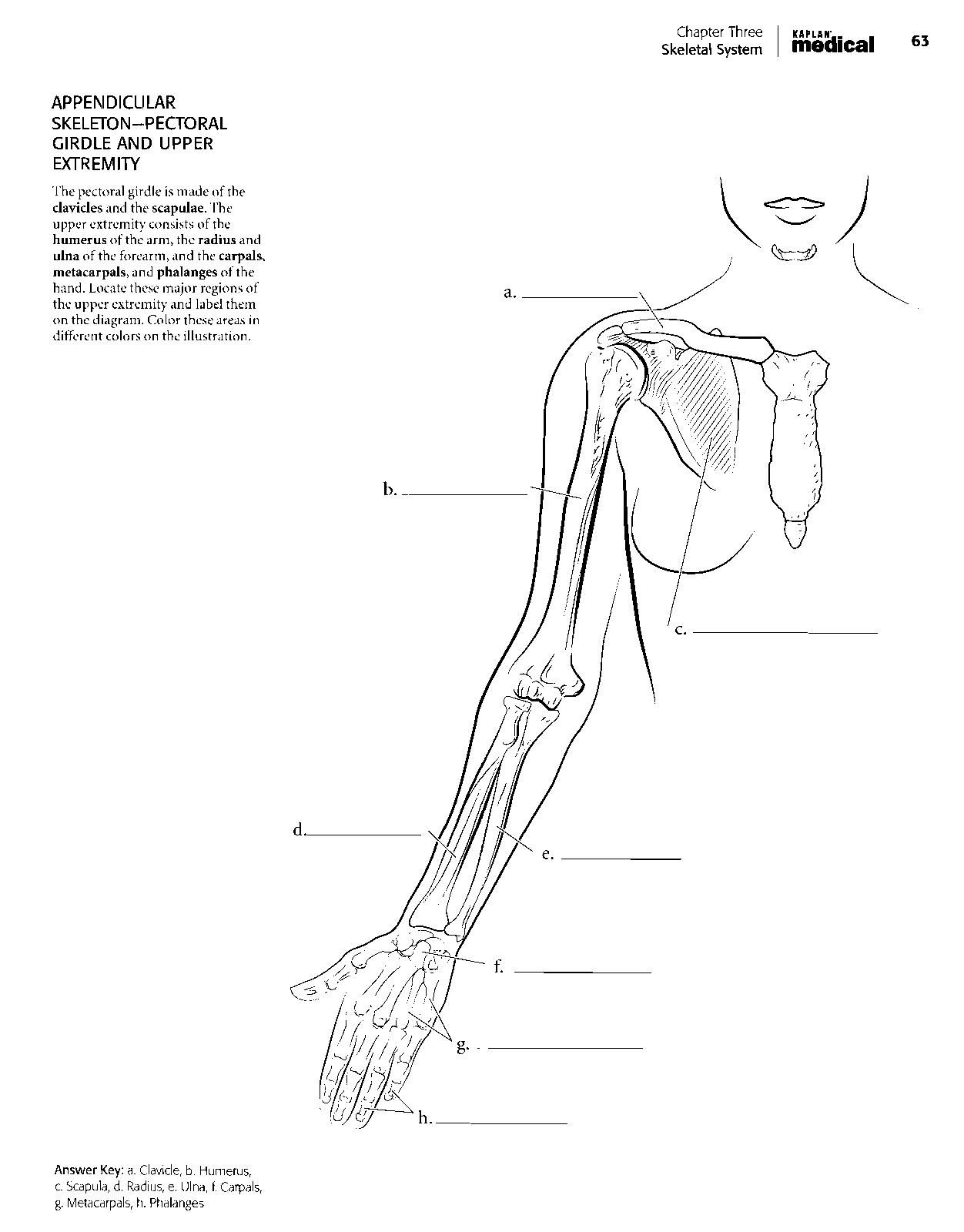 kaplan anatomy coloring book pdf boudli pinterest colour