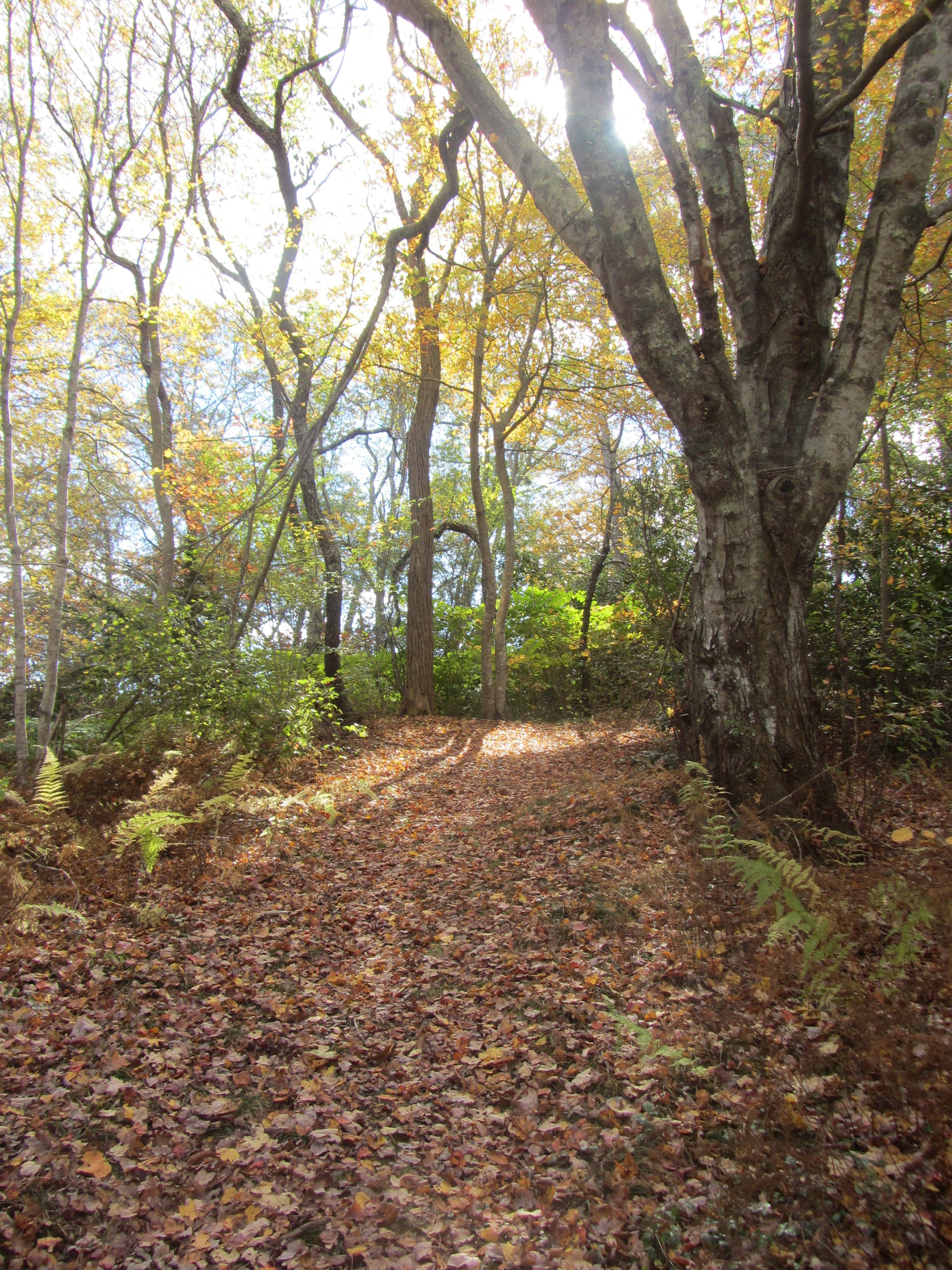 A nature trail at Heritage Museums & Gardens in Sandwich, MA ...