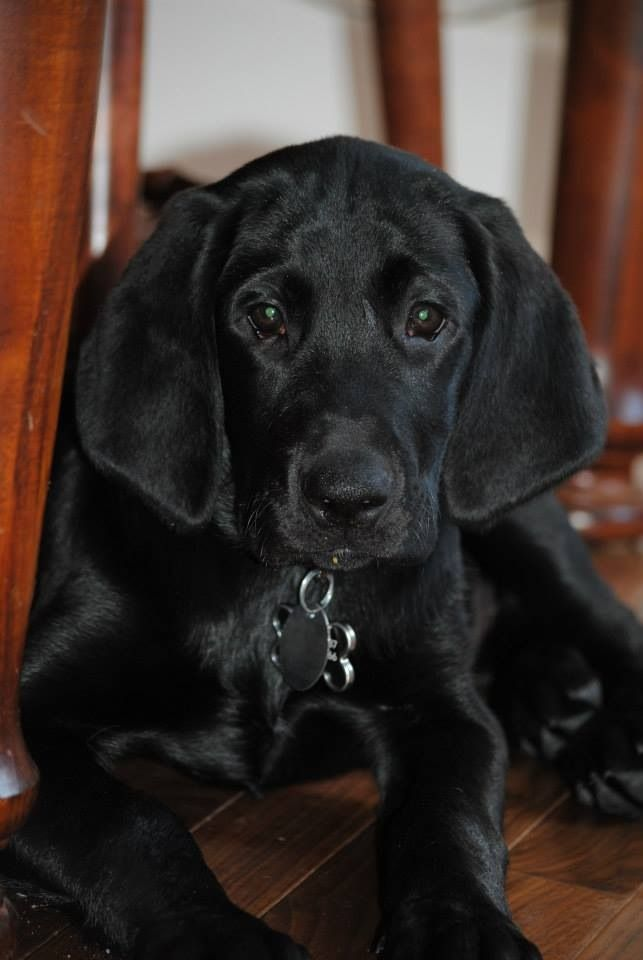 Because Who Wouldnt Love A Face Like This Peace Love Dogs Black Dog