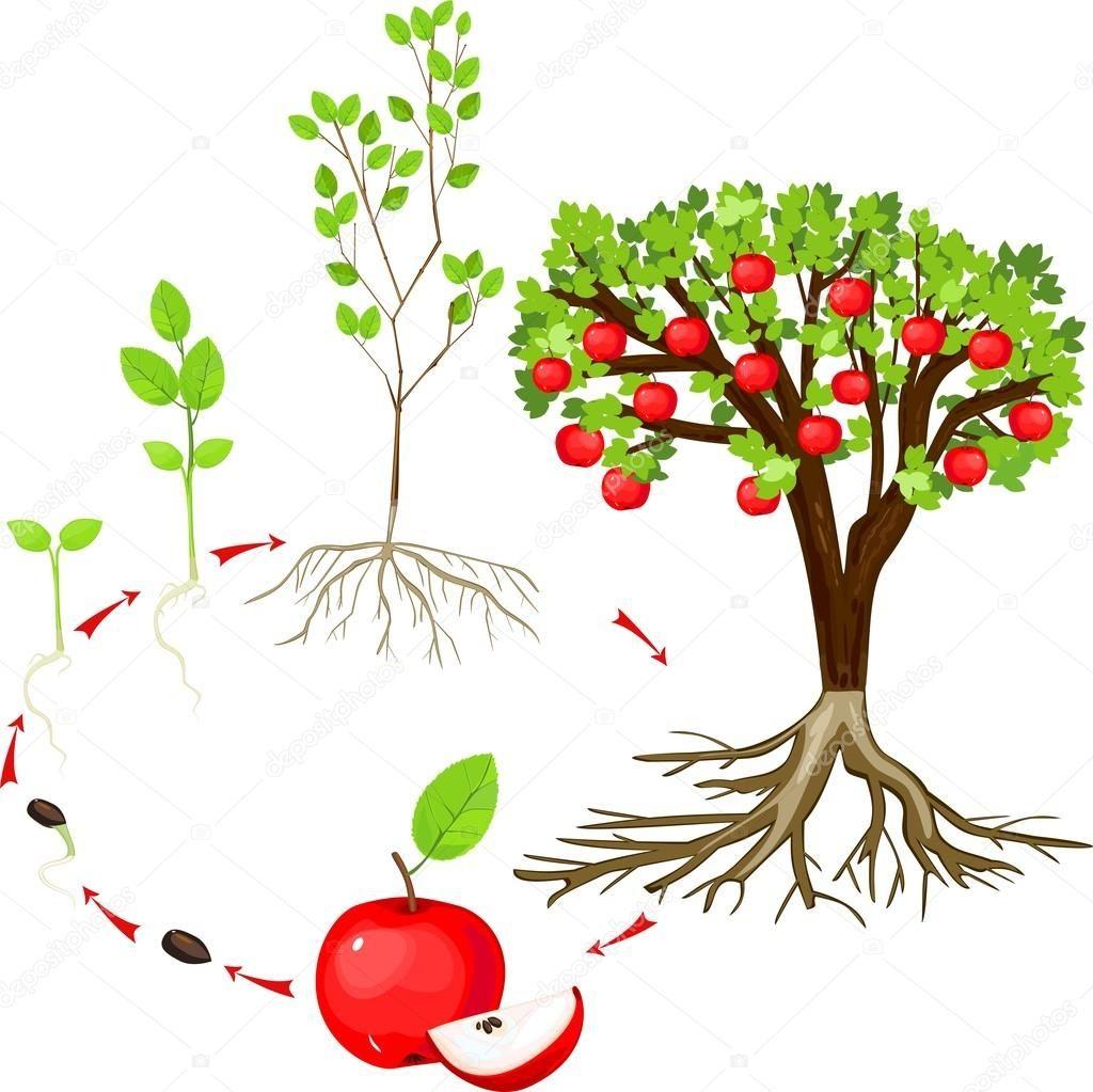 Pin Von Iris Auf Wandgestaltung: Apfel Grundschule, Apfelbaum