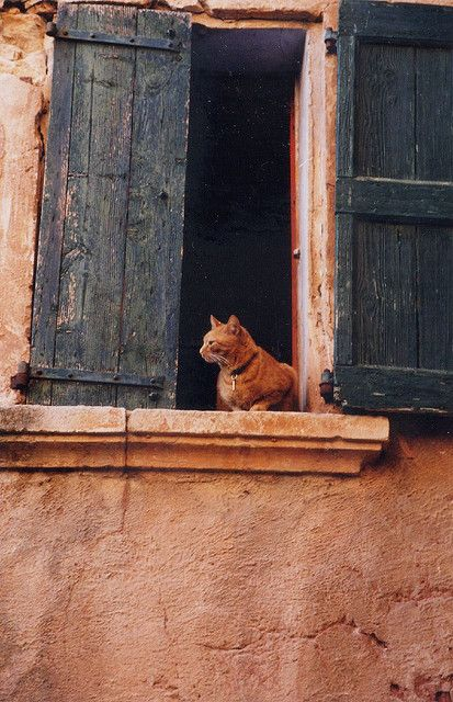 "by IrenaS ""Colour-coordinated cat.  Roussillon, France, where just about everything is orange."""