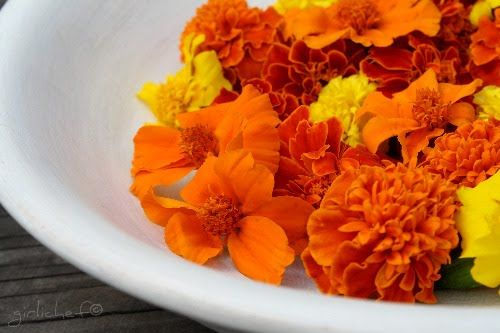 one of my color inspirations- edible marigold and calendula