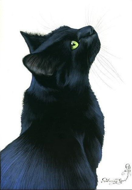 Schwarze Katze Mit Grunen Augen Black Cat Art Cat Art Cat Drawing