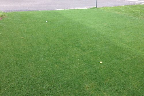 TifGrand left - Tifway right  TifGrand Bermuda turfgrass