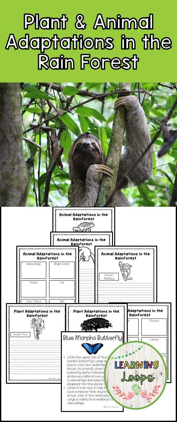 Plant and Animal Adaptations in the Rain Forest Animal