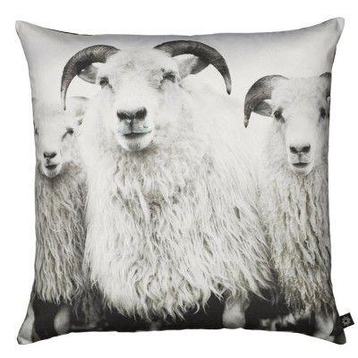 BY NORD PUTE FOTOPRINT SHEEPS 60x60 komplett