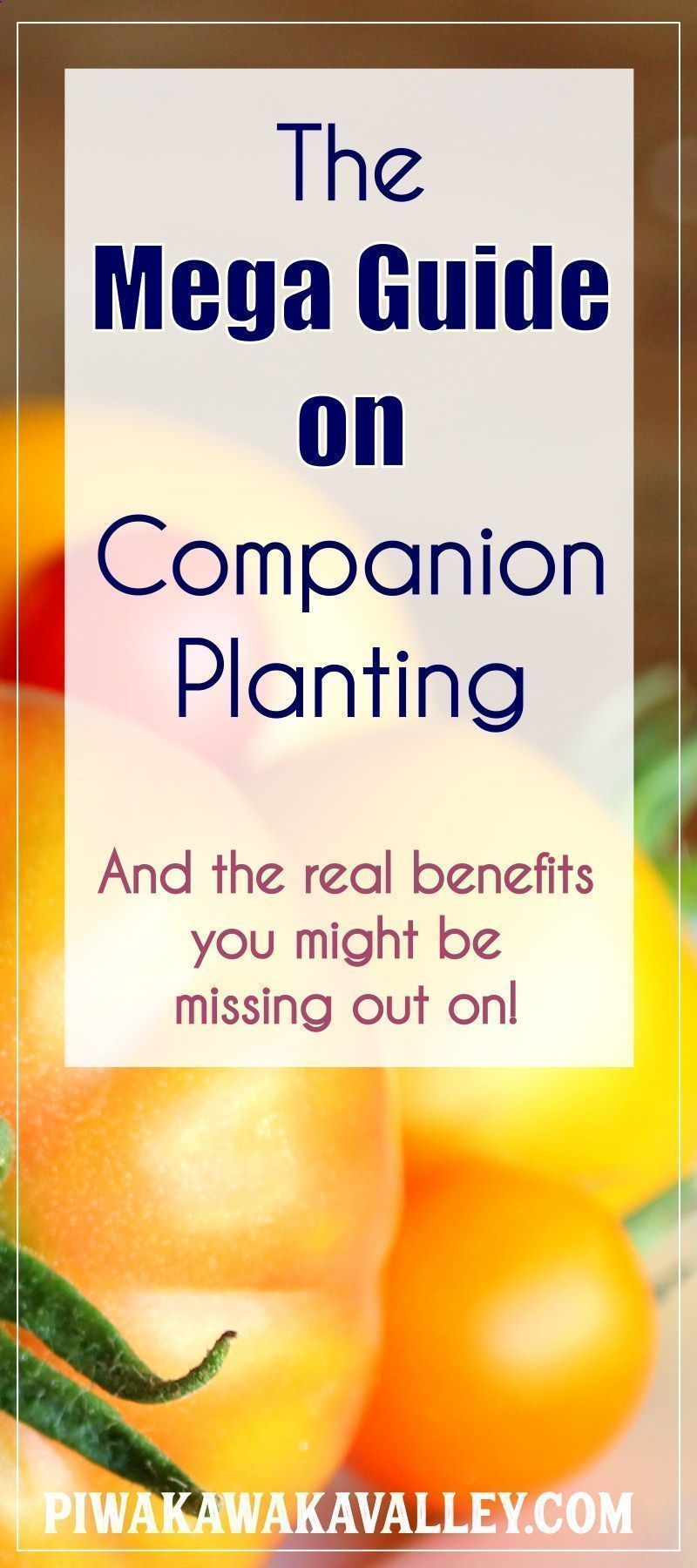 Companion Planting Chart For Vegetables The Real 400 x 300