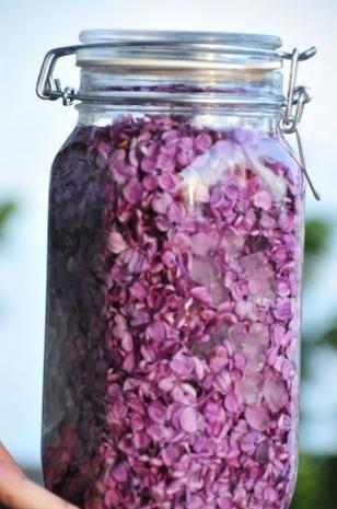 Fliederlikör - Rezept mit Bild